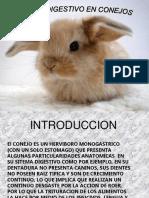 sistema digestivo del conejo