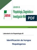 Laboratorio 3. Identificación de Hongos Fitopatógenos