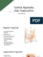 Anatomía Aparato Genital Masculino
