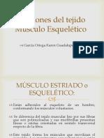Funciones del tejido músculo-esquelético
