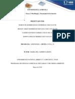 Entomologia Agricola Unidad 2- Tarea 2 Morfologia y Taxonomia de Los Insectos