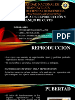 TECNICA de Reproducción y Manejo de Cuyes
