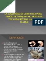 TERMINOLOGIA ANATOMICA 2019.1 (1).ppt