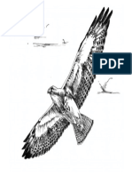 Black and White Line Art Drawing of Swainson Hawk Bird in Flight-converted