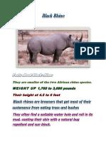 Black Rhino(English Projec)
