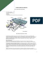 Manual de Construc3a7c3a3o de Piscina