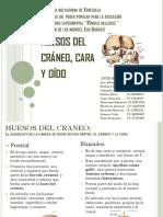 Huesos Diapositivas Jp