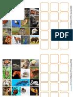 Collage Pictogramas-Fotografías Animales