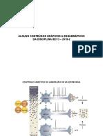 contedos-grficosesquemas (1)