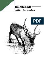 Reindeer booklet
