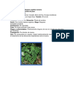 plantas ornamentales completo.docx