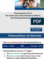 02 Photosynthesis Calvin Cycle Light Independent Reactions