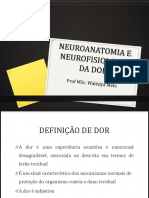 Anatomia Da Dor
