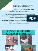 Razas Gallinas Criollas