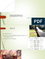 DIGESTIVO Clinica Grandes.