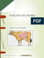 Funcion Del Rumen