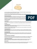Resumen Neurobiología