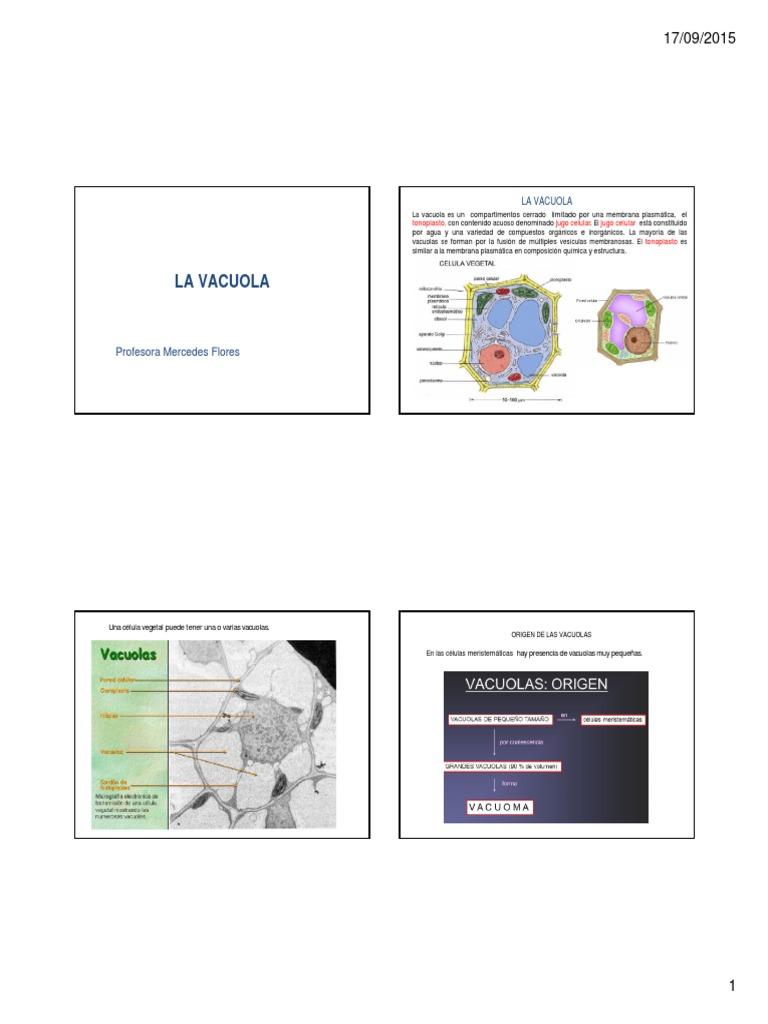 La Vacuola Vacuola Citoplasma