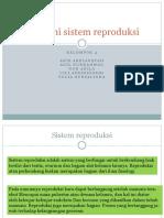 Anatomi sistem reproduksi.pptx