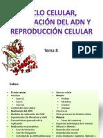 Ciclo celular. Replicación del ADN y reproducción celular