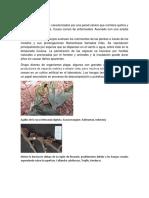 Identificación Del Tipo de Pudrición de La Madera y Hongos Xilófagos en Árboles Urbanos