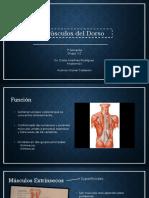 Músculos del dorso.pptx
