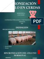 SINCRONIZACIÓN DEL CELO EN CERDAS.pptx