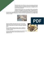 La Fauna de Las Comunidades Acuaticas