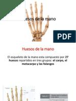 Huesos de La Mano Completo