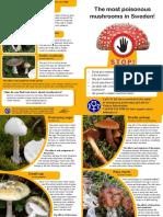 Poisonous mushrooms in Sweden