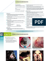 RO FIV Infectia Cu Virusu -Imunodeficientei Feline
