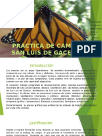 diapositivas de PRACTICA DE CAMPO SAN LUIS DE GACENO.pptx