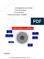 aantomia dle ojo