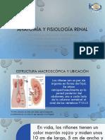 Anatomía y fisiología renal.pptx
