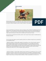 Fases Del Desarrollo Social Del Perro