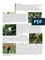 Aves Del Putumayo
