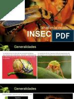 03 - Anatomía de Los Insectos