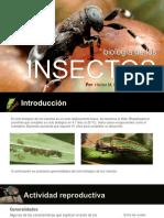04 - Biología de Los Insectos