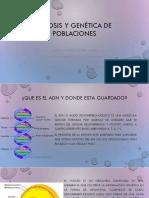 Mitosis y genética de poblaciones 2018.pptx