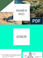 Anatomía en Reptiles