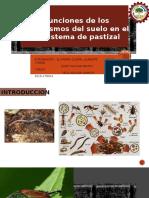 funciones de los organismos en el suelo