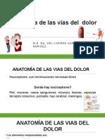 3. Anatomia de Las Vias Del Dolor