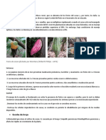 Enfermedades que afectan al cacao.docx