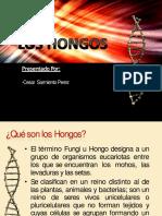 Ppt Hongos- Ok