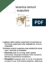 Biomecanica Centurii Scapulare