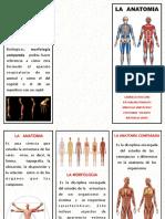 Folleto Anatomia