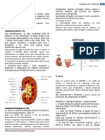 Fisiologia_Renal.docx