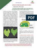 333969724-42-El-Mg-Nutriente-Olvidado-Que-Puede-Salvar-a-Tu-Cultivo.pdf