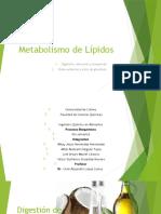 metabolismo lípidos