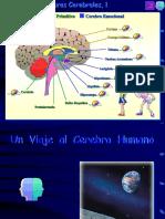 2.El Cerebro